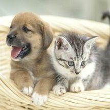 犬や猫などのペット用おせち料理ネット通販の人気ランキング2019