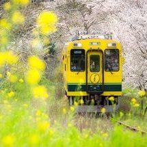 鉄道ファン向け電車や列車の形のおせち通販の人気ランキング2019